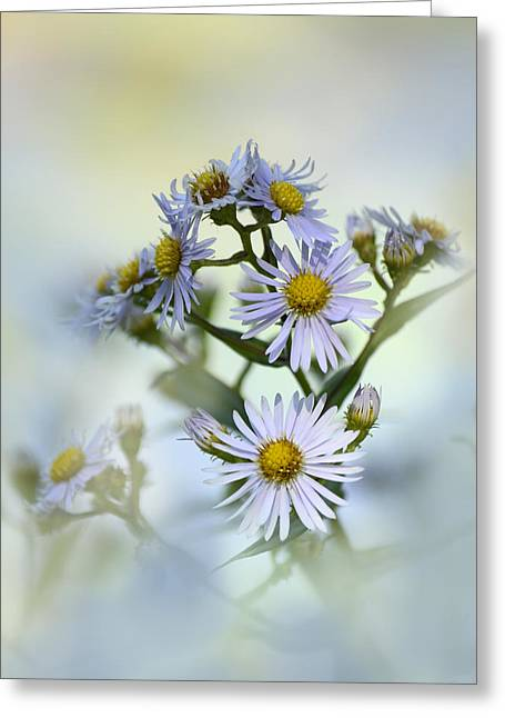 Asters On Blue Greeting Card by Ann Bridges