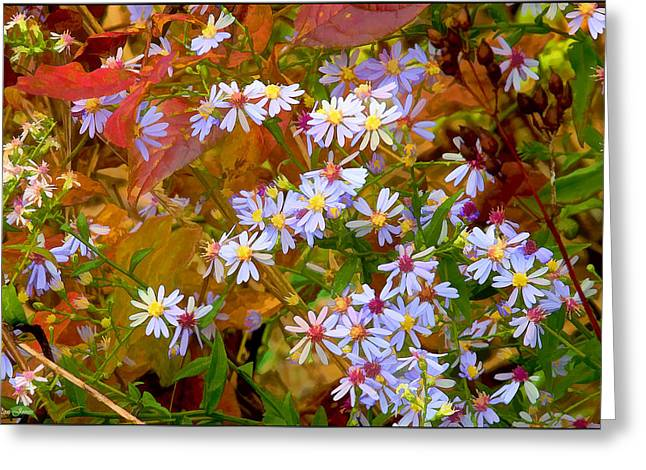 Asters Greeting Card by Ron Jones