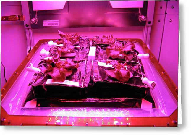 Astronaut Vegetable Production System Greeting Card by Nasa