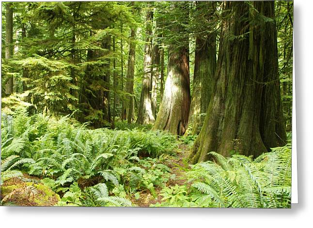 At Cathedral Grove Greeting Card
