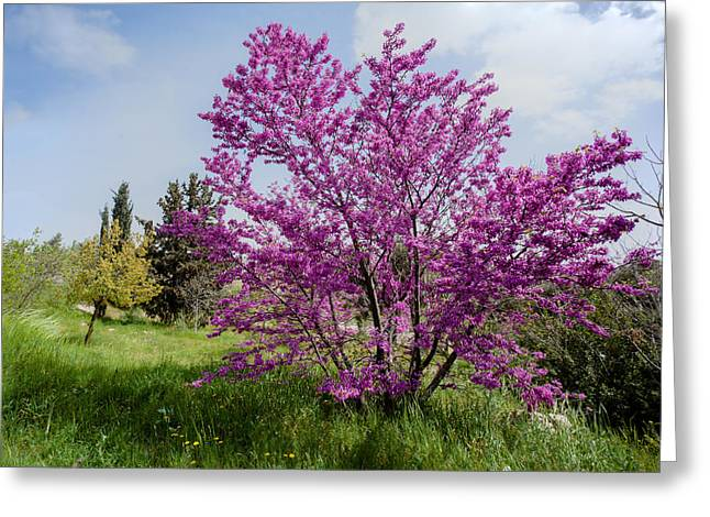 Greeting Card featuring the photograph At Full Blossom by Uri Baruch