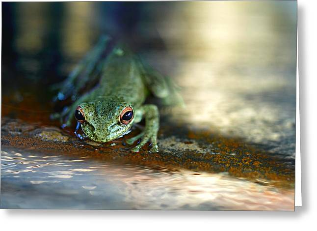 At Swim One Frog Greeting Card by Laura Fasulo