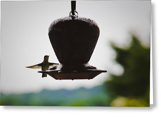 Greeting Card featuring the photograph At The Feeder by Debra Crank