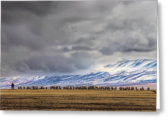 At The Foot Of The Tianshan Mountains Greeting Card