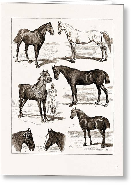 At The Islington Horse Show, London, Uk, 1875 1 Greeting Card by Litz Collection