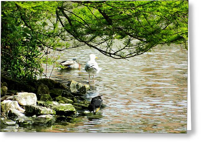 At The Lakes Edge Greeting Card by Sharon Lisa Clarke