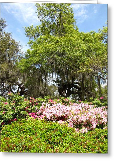Greeting Card featuring the photograph At The Park by Beth Vincent