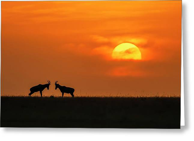 At The Sunset Greeting Card by Jun Zuo