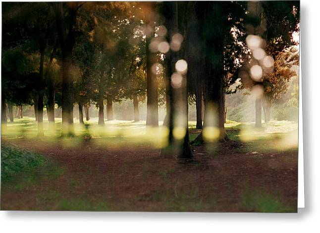 Greeting Card featuring the photograph At The Yarkon Park Tel Aviv by Dubi Roman