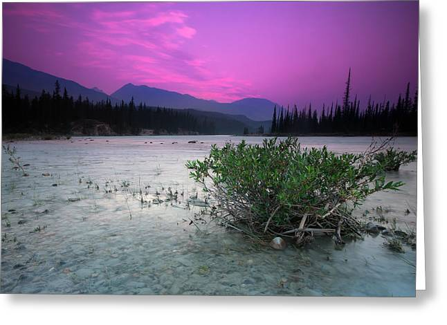 Athabasca River Bush At Sunset Greeting Card by Cale Best