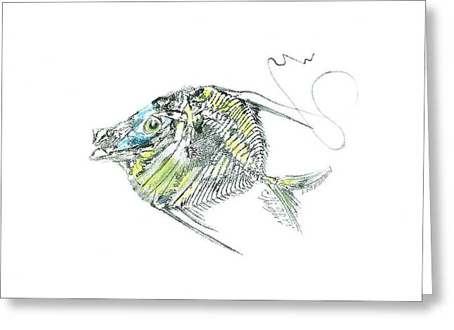Atlantic Lookdown Fish Against White Background Greeting Card