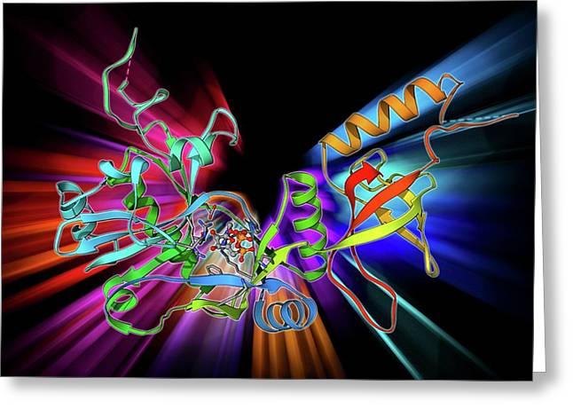 Atp-dependent Dna Ligase Molecule Greeting Card by Laguna Design