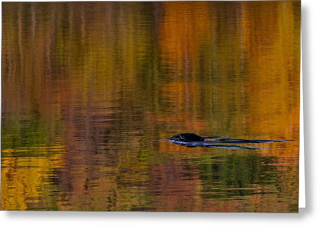 Atumn Reflections Greeting Card by Susan Candelario