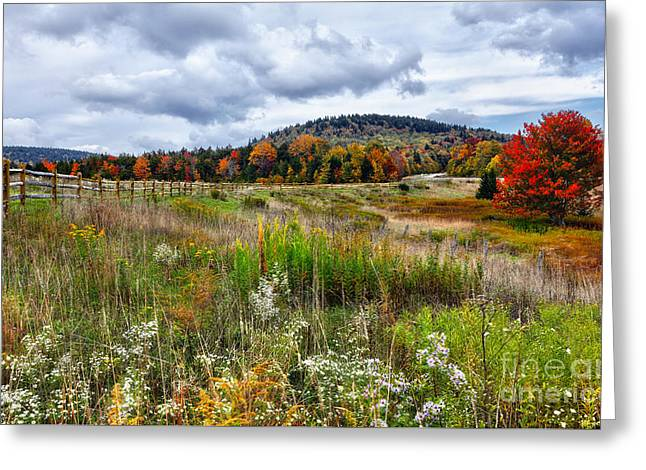August Fall Colors Flowers And Trees I - West Virginia Greeting Card by Dan Carmichael