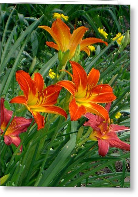 Lilies Galore Greeting Card