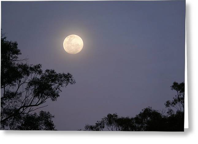 August Moon Greeting Card by Evelyn Tambour