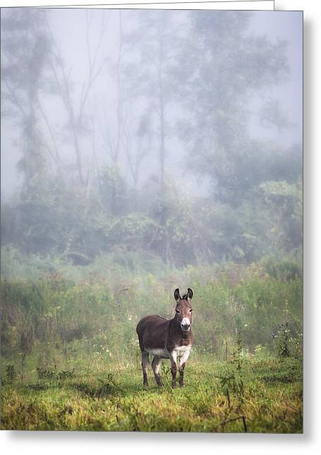 August Morning - Donkey In The Field. Greeting Card by Gary Heller