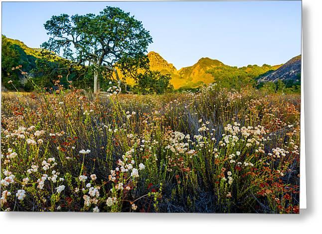 August Sunrise In Malibu Creek State Park Greeting Card by Joe Doherty