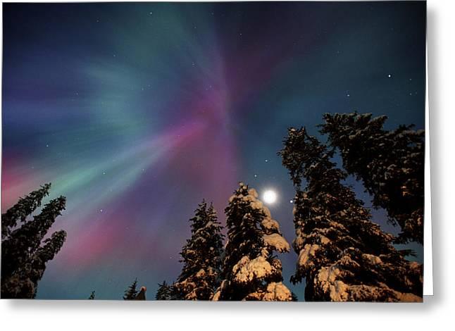 Aurora Corona & Moon Over Crow Creek Sc Greeting Card by Daryl Pederson