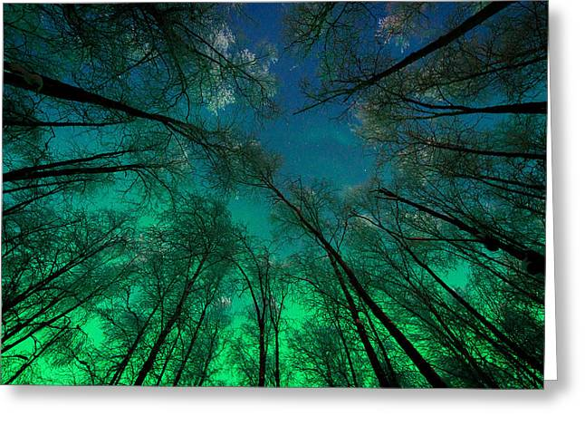 Aurora Glow Through The Birches Greeting Card