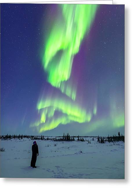 Aurora Watcher With Twilight Curtains Greeting Card