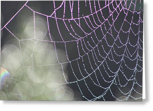 Greeting Card featuring the photograph Aurora's Web by Cathie Douglas