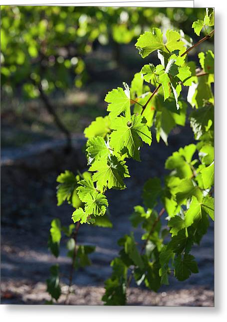 Australia, Clare Valley, Clare Greeting Card
