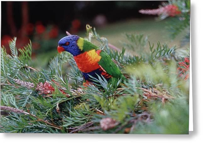 Australia, Eastern States Of Australia Greeting Card by Peter Skinner