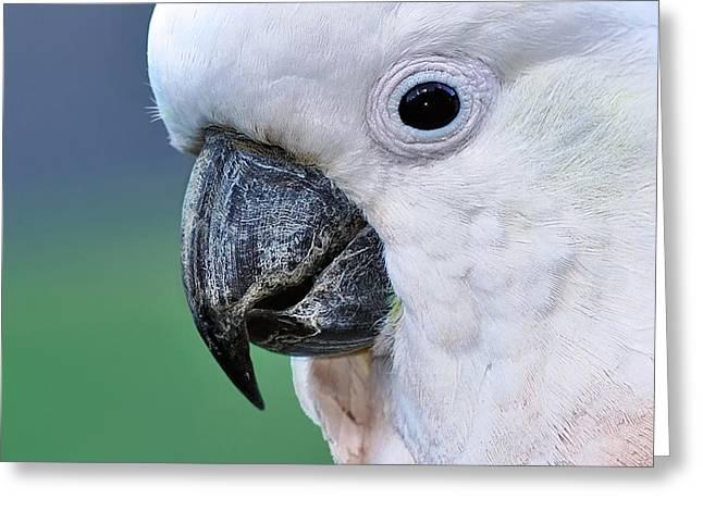 Australian Birds - Cockatoo Up Close Greeting Card by Kaye Menner