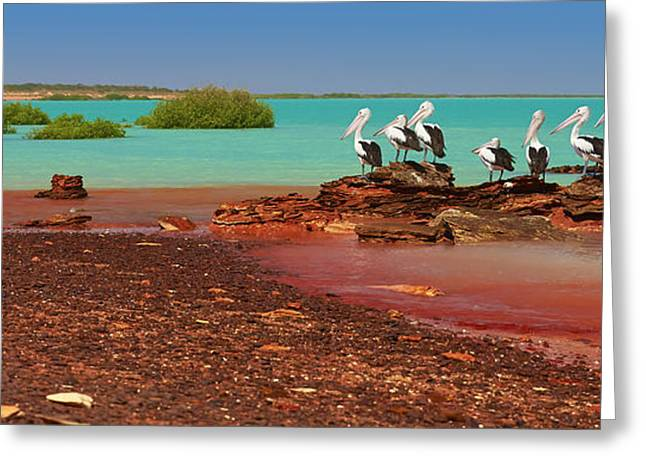 Australian Pelicans Roebuck Bay Greeting Card by Martin Willis