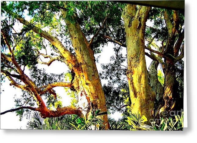 Australian Trees Greeting Card by John Potts