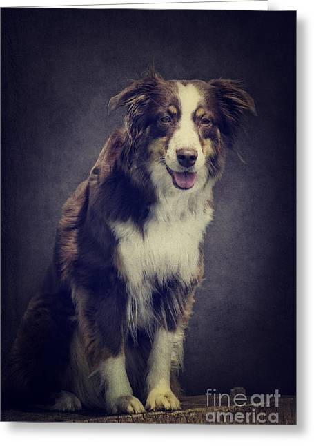 Australien Shepherd Portrait No2 Greeting Card by Angela Doelling AD DESIGN Photo and PhotoArt