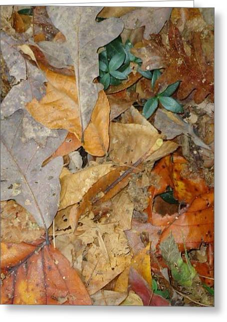 Autum Leaves Greeting Card by Glenn Calloway