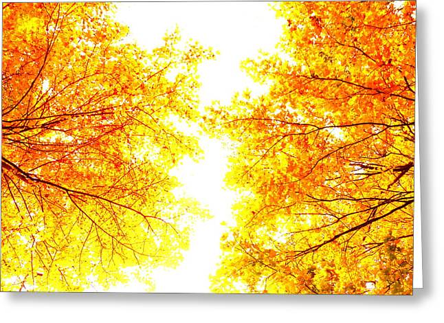 Autumn Abstract Greeting Card by Tim Good
