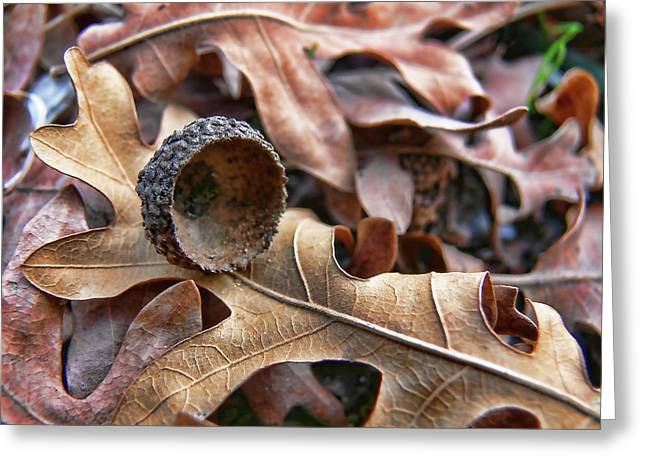 Autumn Acorn And Oak Leaves Greeting Card by Jennie Marie Schell