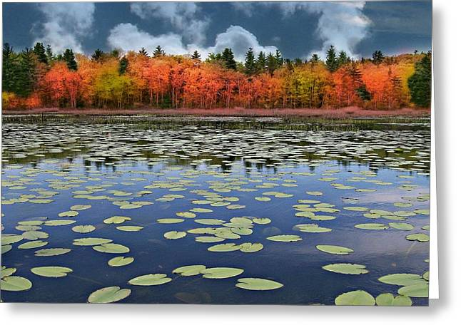 Autumn Across The Pond Greeting Card by Barbara S Nickerson