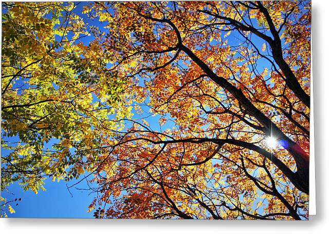 Autumn Afternoon Greeting Card by Cricket Hackmann