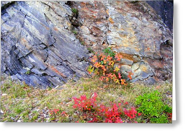 Autumn And Rocks Greeting Card