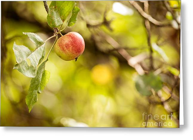 Autumn Apple Greeting Card