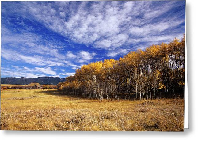 Autumn Aspens And Old Barn On Ranchland Greeting Card by Chuck Haney