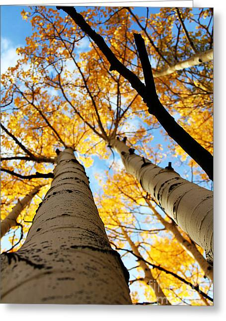 Greeting Card featuring the photograph Autumn Aspens by Kate Avery