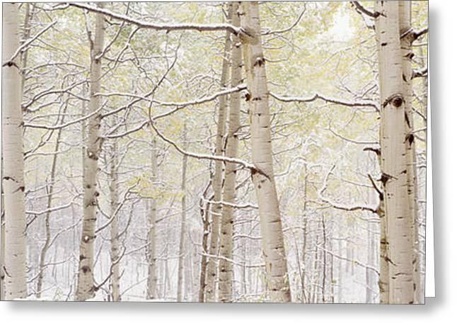 Autumn Aspens With Snow, Colorado, Usa Greeting Card