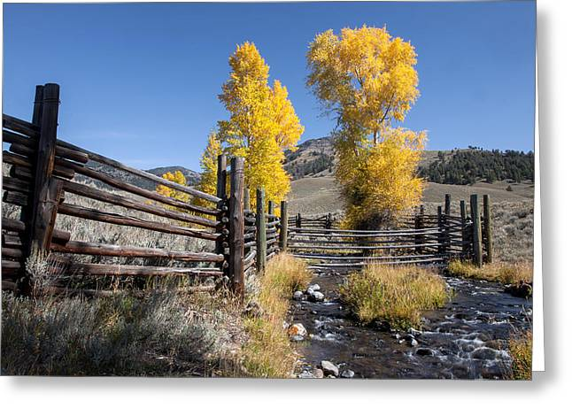 Greeting Card featuring the photograph Autumn At The Lamar Buffalo Ranch by Jack Bell