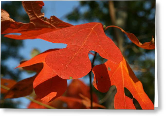 Autumn Attention Greeting Card by Neal Eslinger