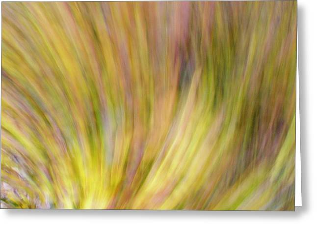 Greeting Card featuring the photograph Autumn Azaleas 4 by Bernhart Hochleitner