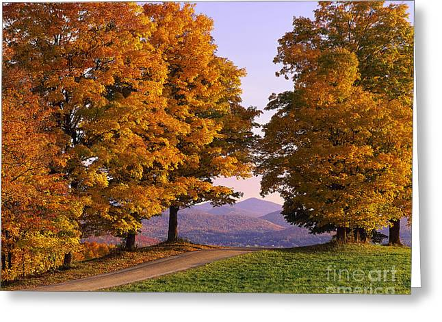 Autumn Backroad View Greeting Card