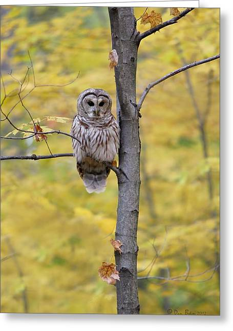 Autumn Barred Owl Greeting Card