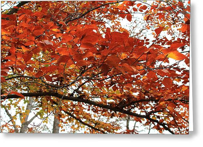 Greeting Card featuring the photograph Autumn Beauty by Candice Trimble