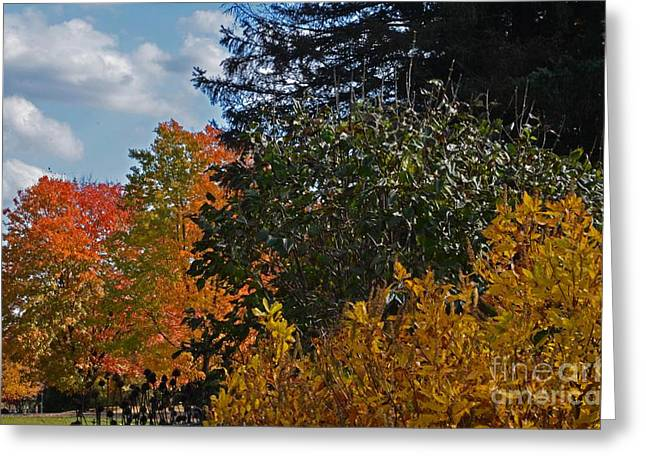 Greeting Card featuring the photograph Autumn Beauty by Judy Wolinsky