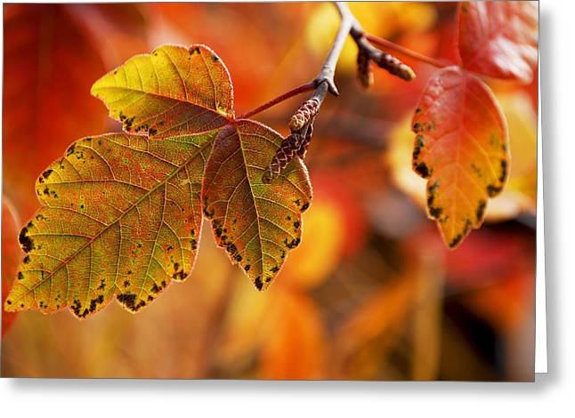 #autumn Greeting Card